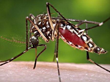 My phat hien nhom muoi dau tien mang virus Zika - Anh 1