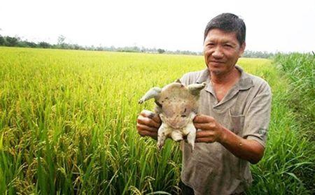 Lao nong mang tieng gan vi bo tien ngoai ruong - Anh 1