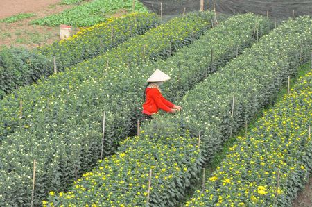 Ha Nam: Lang hoa Phu Van san sang don Tet - Anh 2