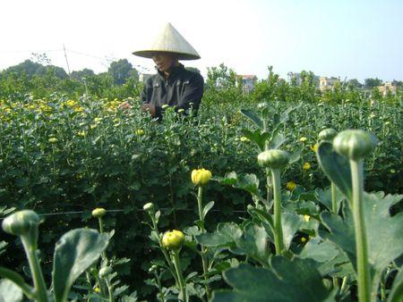 Ha Nam: Lang hoa Phu Van san sang don Tet - Anh 5