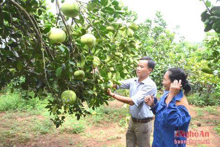 Thi xa Thai Hoa: Phan dau la trung tam cuc tang truong phia Tay - Anh 5