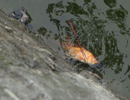 Nguoi Ha Noi tien ong Tao ve troi som trong gia ret, suong mu - Anh 9