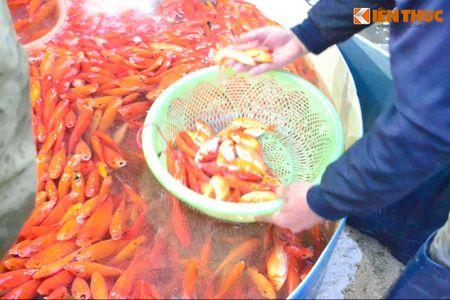 Cho ca lon nhat Ha Noi tap nap truoc ngay cung ong Cong ong Tao - Anh 15
