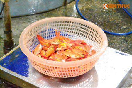 Cho ca lon nhat Ha Noi tap nap truoc ngay cung ong Cong ong Tao - Anh 5