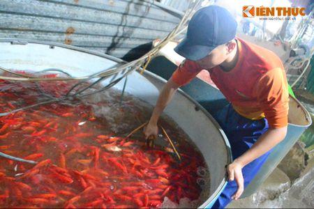 Cho ca lon nhat Ha Noi tap nap truoc ngay cung ong Cong ong Tao - Anh 6