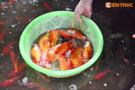 Cho ca lon nhat Ha Noi tap nap truoc ngay cung ong Cong ong Tao - Anh 8