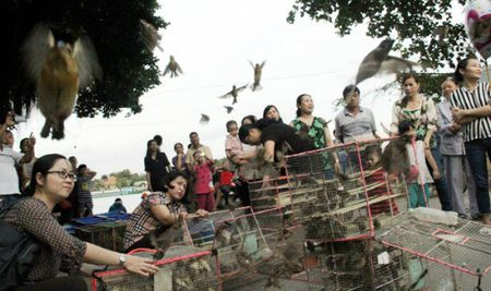 Chim phong sinh 'hut' khach Ha Noi ngay tien ong Cong ong Tao - Anh 1