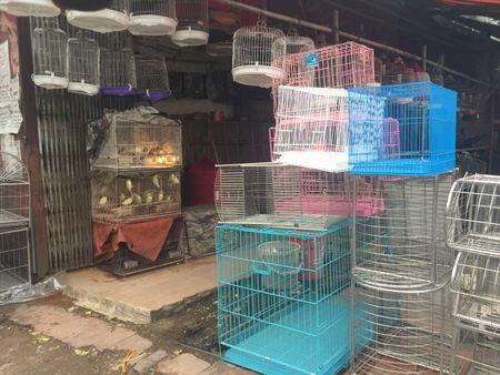 Chim phong sinh 'hut' khach Ha Noi ngay tien ong Cong ong Tao - Anh 2