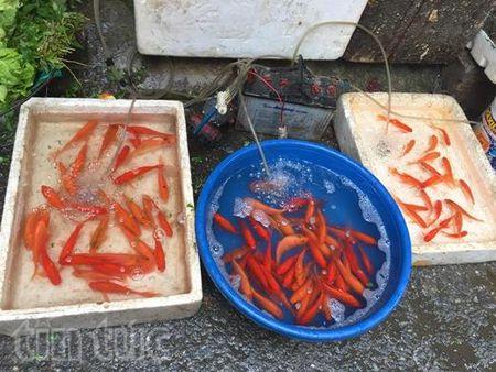 Hoa tuoi tang gia manh dip Tet ong Cong, ong Tao - Anh 2