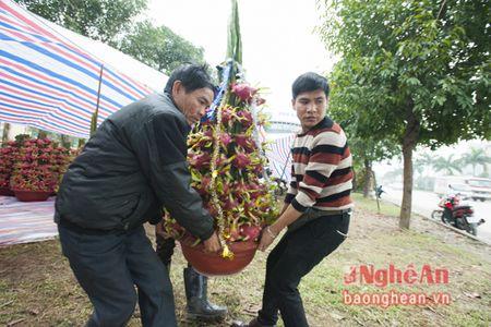 Doc dao voi thanh long len pho don Tet - Anh 7