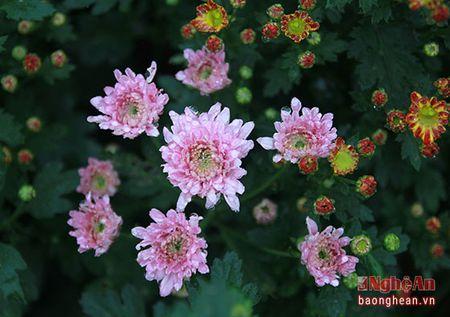 Ruc ro lang hoa ven do ngay can Tet - Anh 4