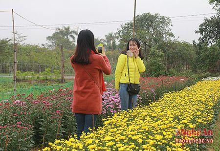 Ruc ro lang hoa ven do ngay can Tet - Anh 8
