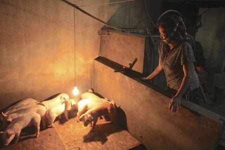 Nguoi dan dieu dung vi gia lon giam manh truoc Tet Dinh Dau - Anh 1