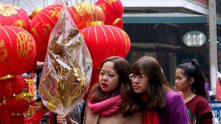 Nguoi Ha Noi hoi ha sam 'nha lau, cay vang' tien Tao quan - Anh 3