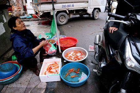 Nguoi Ha Noi hoi ha sam 'nha lau, cay vang' tien Tao quan - Anh 9
