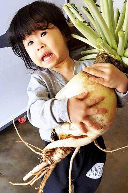 Cu cai 'khung' nang 5,5kg sieu hiem o Lam Dong - Anh 1
