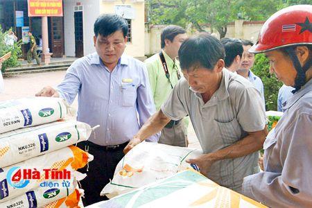 15 giong cay trong ho tro nguoi dan vung lu deu dam bao chat luong - Anh 1