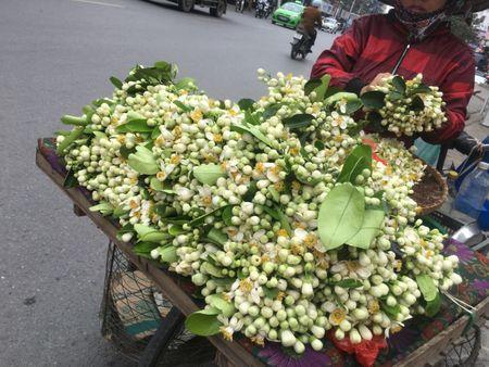 Ve dep tinh khoi hoa buoi tren duong pho Ha Noi - Anh 1