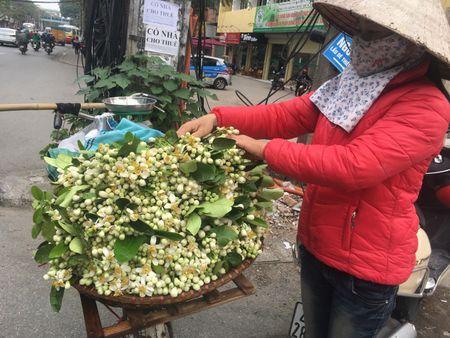 Ve dep tinh khoi hoa buoi tren duong pho Ha Noi - Anh 2