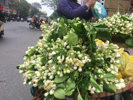 Ve dep tinh khoi hoa buoi tren duong pho Ha Noi - Anh 7