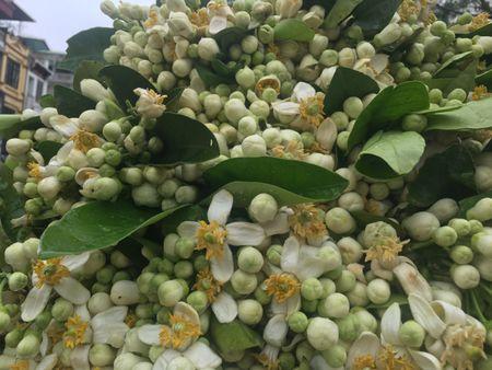 Ve dep tinh khoi hoa buoi tren duong pho Ha Noi - Anh 10
