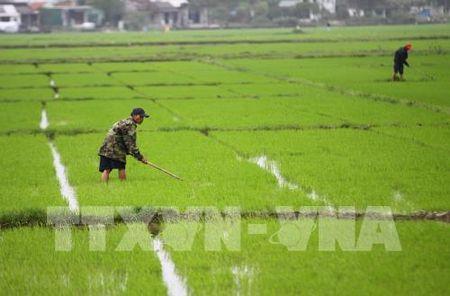 Gan 95% dien tich da co nuoc de gieo cay vu Dong Xuan - Anh 1