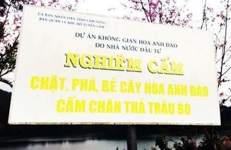 Vu be hoa Da Lat: Binh Thuan khong nhan nhuong - Anh 2