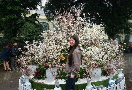 Man nhan voi hoa anh dao Nhat Ban no ro duoi mua xuan Ha Noi - Anh 23