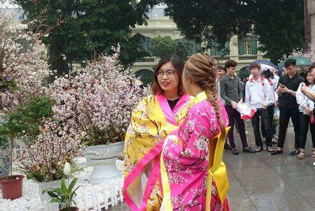 Man nhan voi hoa anh dao Nhat Ban no ro duoi mua xuan Ha Noi - Anh 36