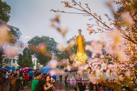 Nguoi Ha Noi doi mua xem hoa Anh dao Nhat Ban - Anh 1