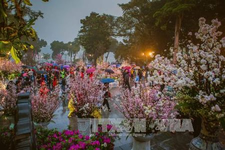 Nguoi Ha Noi doi mua xem hoa Anh dao Nhat Ban - Anh 2