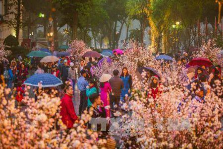 Nguoi Ha Noi doi mua xem hoa Anh dao Nhat Ban - Anh 3