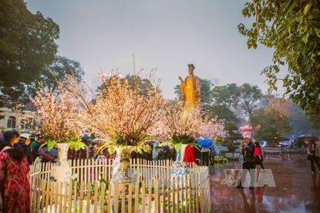 Nguoi Ha Noi doi mua xem hoa Anh dao Nhat Ban - Anh 4