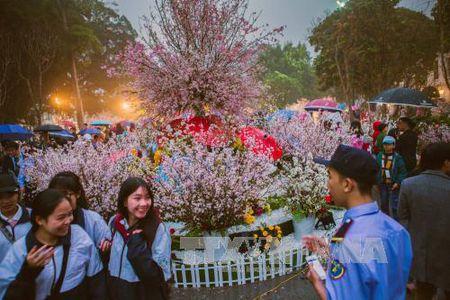 Nguoi Ha Noi doi mua xem hoa Anh dao Nhat Ban - Anh 9