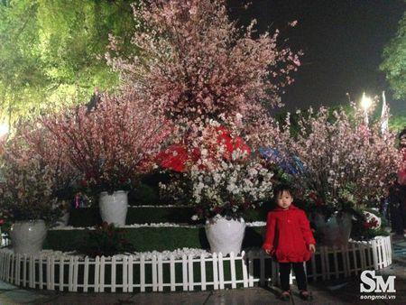 Le hoi hoa anh dao Ha Noi 2017: 100% hoa that nhung kem sac - Anh 11