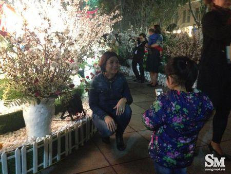 Le hoi hoa anh dao Ha Noi 2017: 100% hoa that nhung kem sac - Anh 12