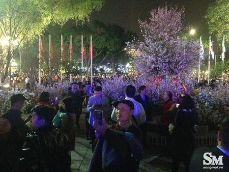Le hoi hoa anh dao Ha Noi 2017: 100% hoa that nhung kem sac - Anh 13