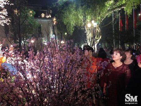 Le hoi hoa anh dao Ha Noi 2017: 100% hoa that nhung kem sac - Anh 15