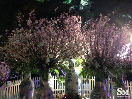 Le hoi hoa anh dao Ha Noi 2017: 100% hoa that nhung kem sac - Anh 6