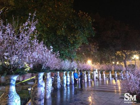 Le hoi hoa anh dao Ha Noi 2017: 100% hoa that nhung kem sac - Anh 7