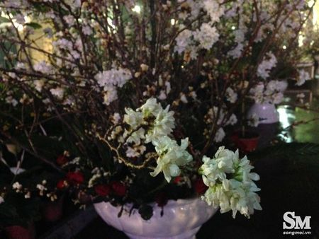 Le hoi hoa anh dao Ha Noi 2017: 100% hoa that nhung kem sac - Anh 9