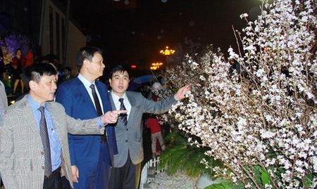 5.000 canh hoa anh dao duoc trung bay tai Vinh Phuc - Anh 1