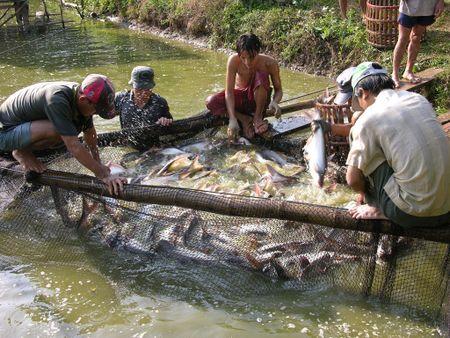 Phai cong bo khang sinh su dung trong thuc an chan nuoi - Anh 1