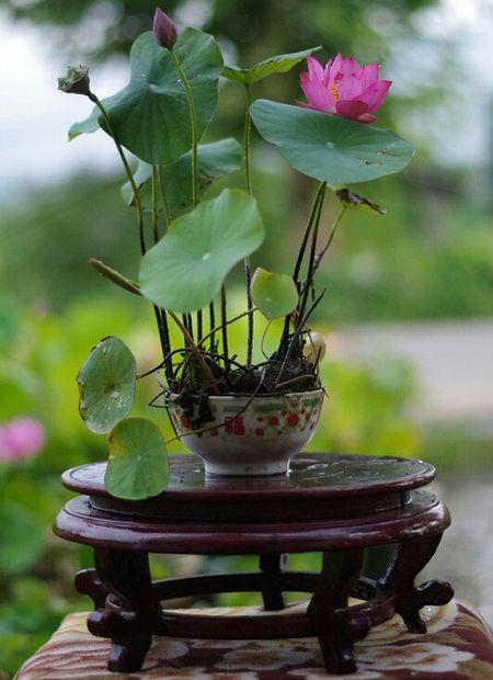 Mach ban nhung cach trong hoa sen doc la, don gian - Anh 1