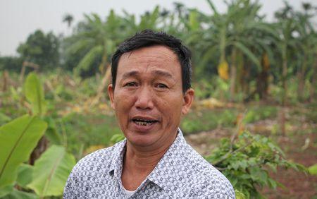 Giam doc thue con do triet ha 3.000 cay chuoi cua nguoi dan - Anh 1