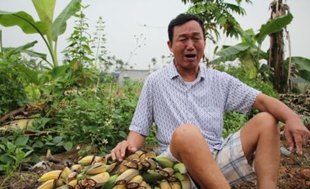 Giam doc chu muu triet ha vuon chuoi cua lao nong Hai Phong - Anh 1