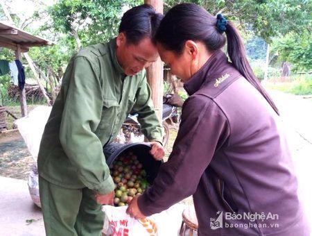 Bat thuong thuong lai thu mua man non voi gia cao o Ky Son - Anh 2