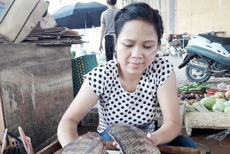 Den luot thuy san rot gia manh - Anh 1