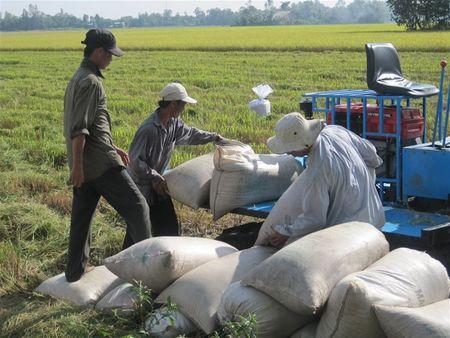FAO du bao nam 2017 Viet Nam dat 43,5 trieu tan lua - Anh 1