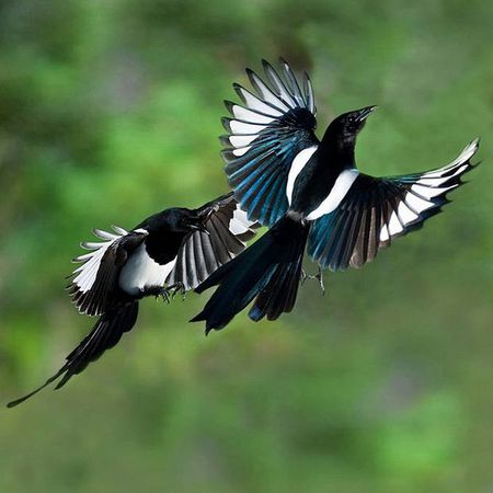 Giai ma diem bao khi chim bay, ran bo vao nha duoi goc nhin khoa hoc phong thuy - Anh 1